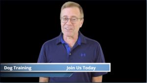 Human Spokesperson Videos